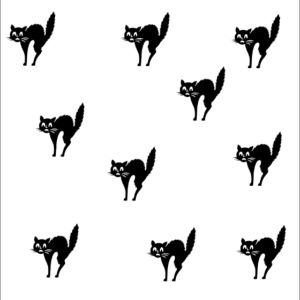 Katzen / Cats