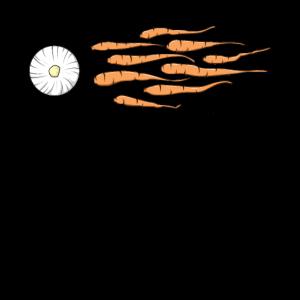 Fruchtbarkeit Karotten Sperma Geschenk Sex