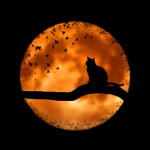 Eine Katze inhaliert die Nacht während des Sonnenuntergangs