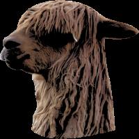 Zotteliges Lama