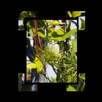 Pflanze im Eckigen Design
