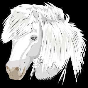 Pferdekopf Weiße Stute weißes Pferd Vollblut Pony