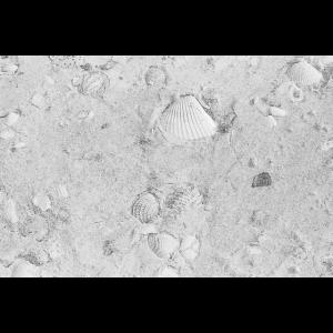 Einfach Strand Sand Muscheln und Meer.