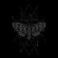 Motten Geometrie