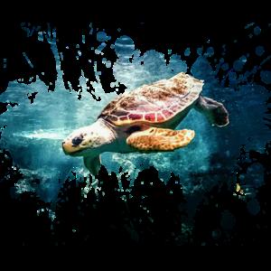 Petcontest Schildkröte