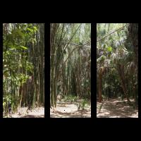 Bambus und Palmen