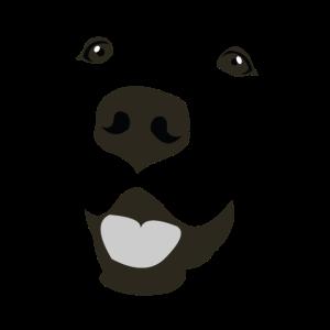 Labrador Gesicht