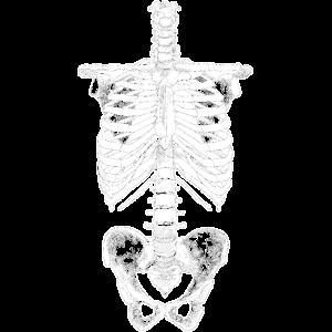 Skelett Brustkorb Knochen Anatomie