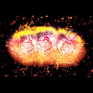 Kamelie Pflanze brennend