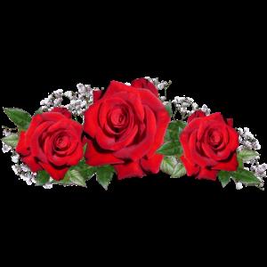 Die drei Rosen