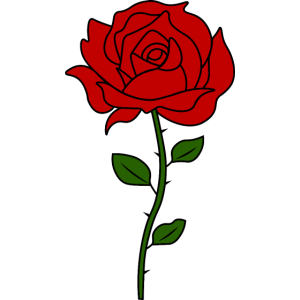 Rose Blumen Tumblr