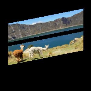 Lamas in der Natur