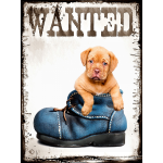 wanted puppy