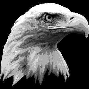 Adlerkopf, schwarz-weiß, Eagle, Adler