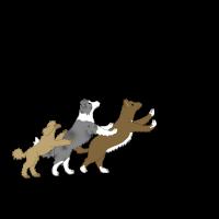 Dog Dancing 5