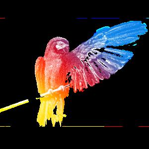 Papagei, Ara, Vogel, Fliegen, Bunt, Geschenk,