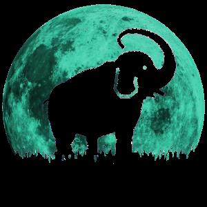 cooler Elefant
