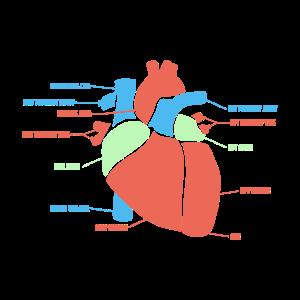 Anatomie des Herz Medizin Geschenk Kardiologie