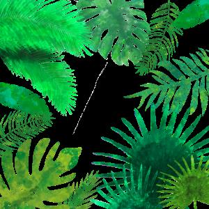 Erkunde den Dschungel