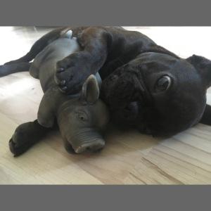 kuschelnder Hund