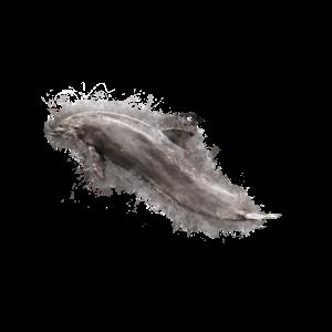 Delphin Meeressäuger hell glühend