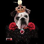 english bulldog king Krone spitzenkragen Herz