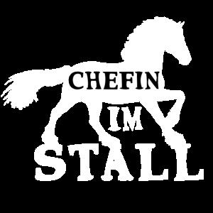 Chefin im Stall Pferd