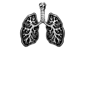 Lunge Lungenflügel Anatomie Atmen Atmung