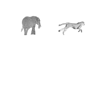 Afrika Tiere weiss grau