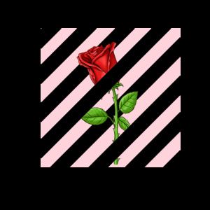 Off Rose