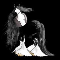 Shire Horse - Shire Horses - Kaltblut - Pferd