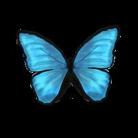 Schmetterling Butterfly Tier Blau