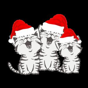 Weihnachtsmuetze Katzen nikolaus weihnachten