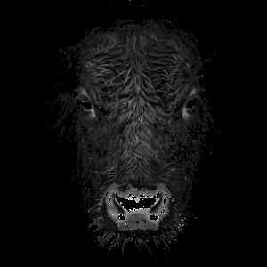 Rinderwahnsinn Stier Kuh Rind Landwirt Bauer