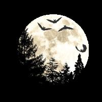 Wald mit Tannen, Mond und Fledermäusen
