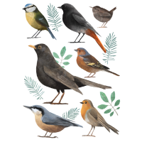 Kleine Vogelkunde