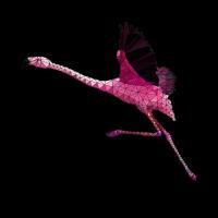 0033.1 Polygon Flamingo 3