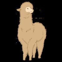 Alpaka Süßes Alpaca Zootier Tierkind Geschenk