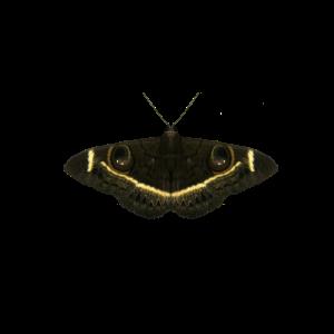 Schmetterling - Insekt - Afrika - Kenia - Safari