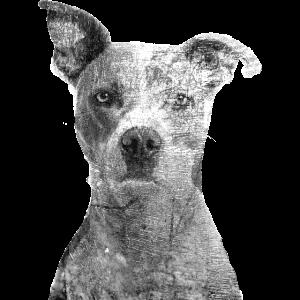 Dog Hund wauwau schwarz weiss Doppelbelichtung