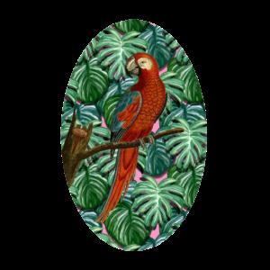 Papagai Vogel Wald Urwald Regenwald bunt