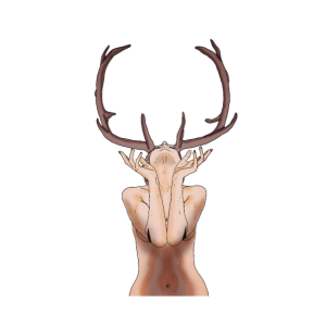 Rotwild Weiblichen