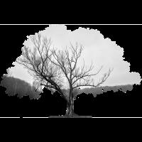 surreal gray tree