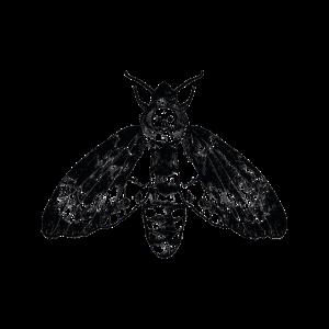 Motte Geometrie Insekt Falter