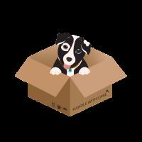 Hund in der Schachtel