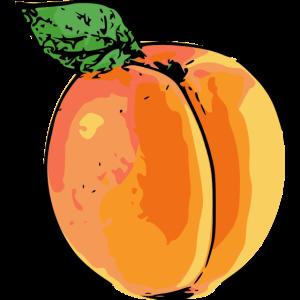 Aprikose popart