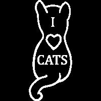 Katze weiss liebe