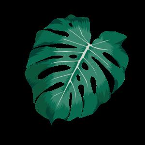 Monstera deliciosa Instagram Pflanze Plant Blatt