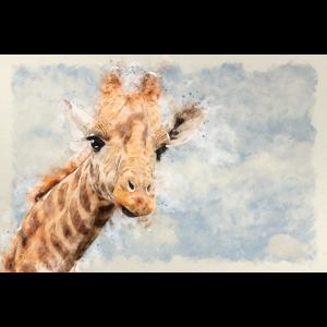 Giraffen Zeichnung