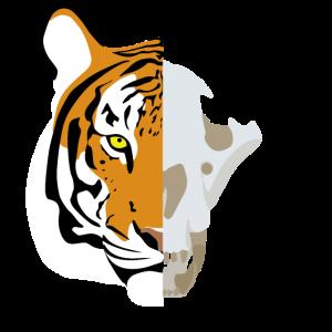 Tiger Schaedel